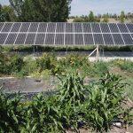 Wild Rose Emu goes Solar