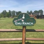 Wild Rose Emu Ranch